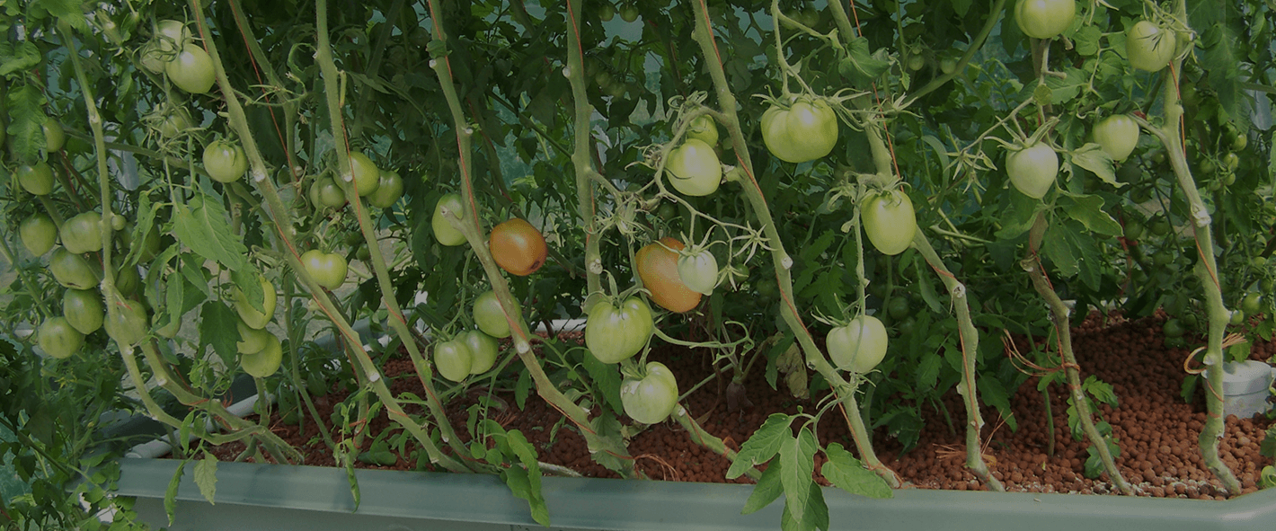 Permalink to: Welcome to Outdoor Aquaponics